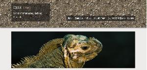 CSS3 Lizard