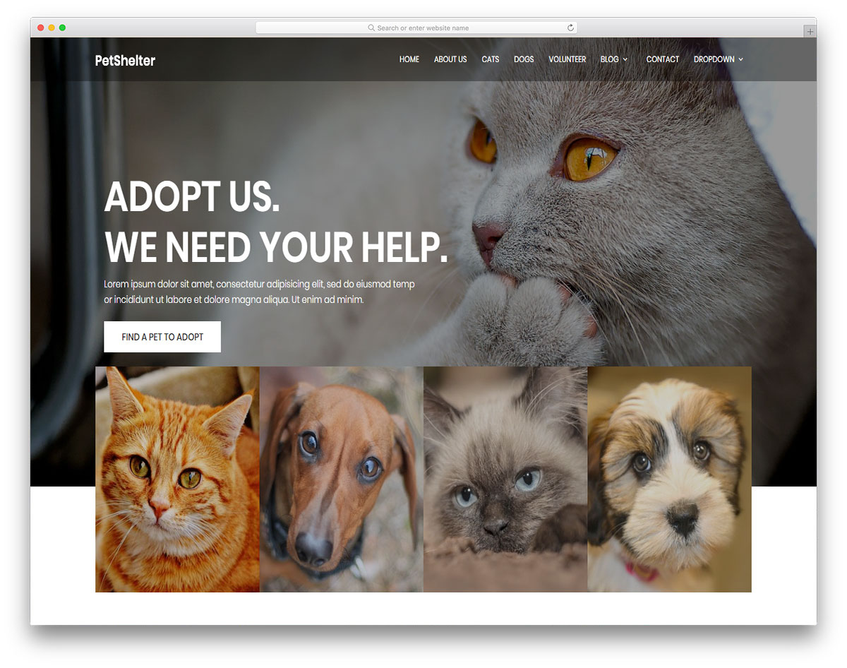 Animal Shelter free template